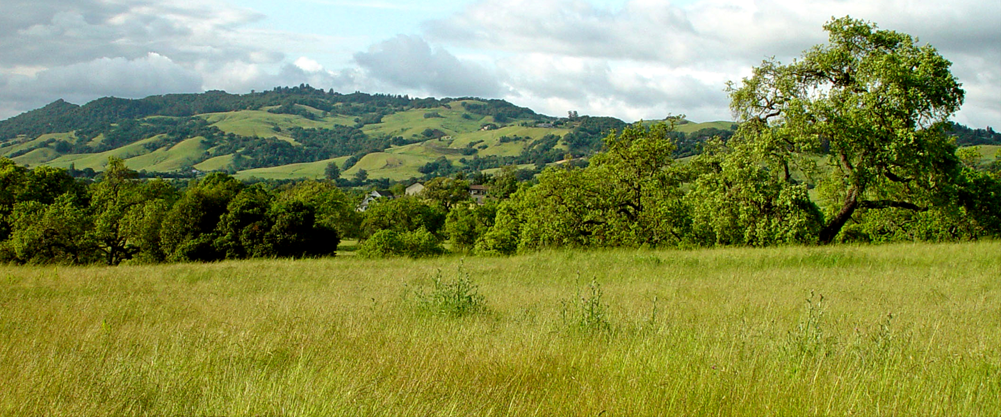 hills of Sonoma County